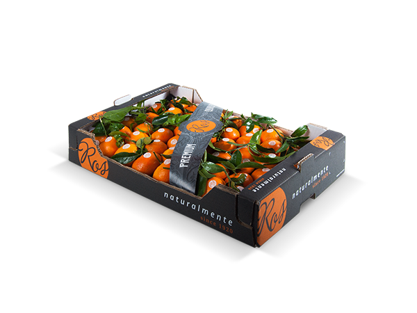 Clementines with leaf alveolus plastic tray 60x40x10 cm